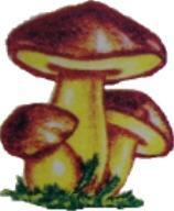 El Bardal Productos Silvestres del Bosque